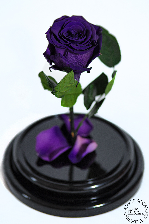 Фиолетовая роза в колбе